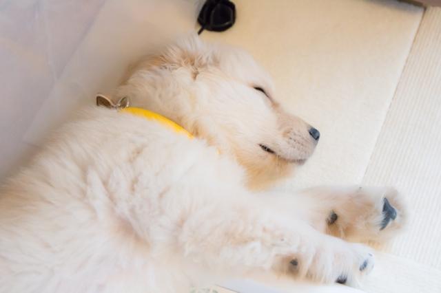 愛犬のお腹が鳴る危険な症状の見極め方と改善する方法