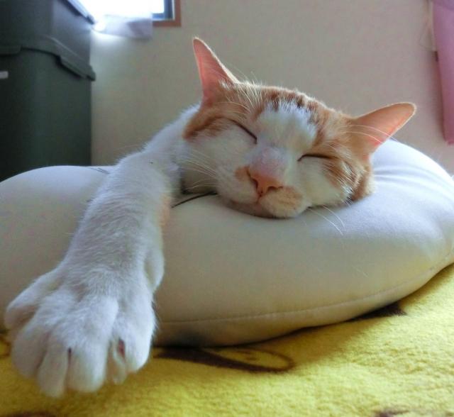 猫の気になる臭い!部屋にこもった悪臭を消し去る方法
